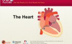 An introduction to the anatomy and function of the heart.